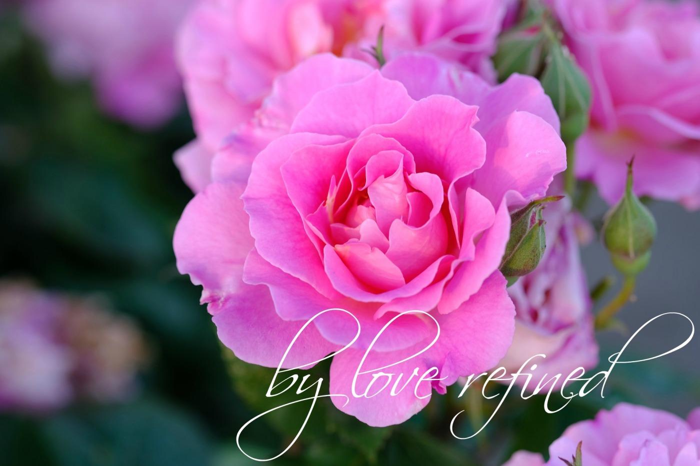 rose BLR